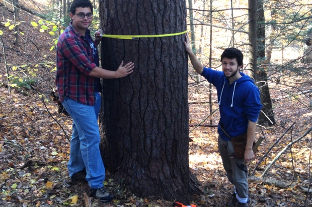 David Chernak '17, Mike Devito '16 measure a hemlock to show growth